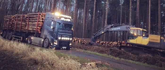 Export bosbouw
